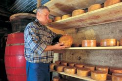 Visit Croatia's best cheese factory!